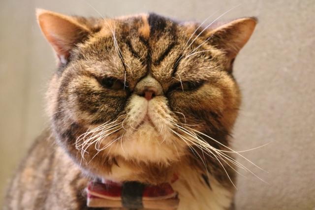しかめっ面をする猫ちゃん