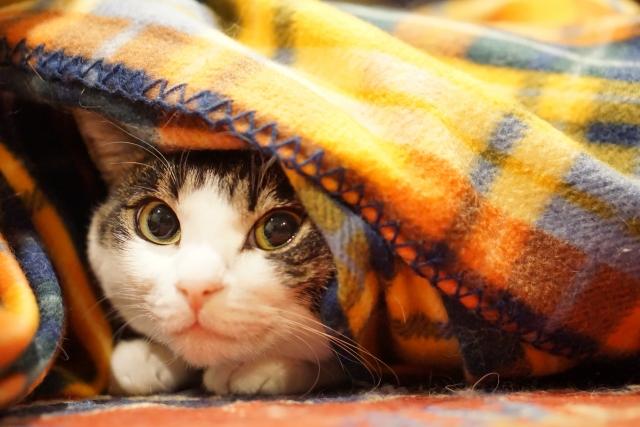 布から覗く猫ちゃん
