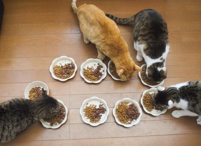 数多いキャットフードから好みを選ぶ猫ちゃん