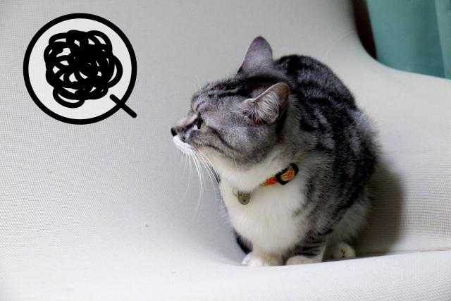 悩む猫ちゃん