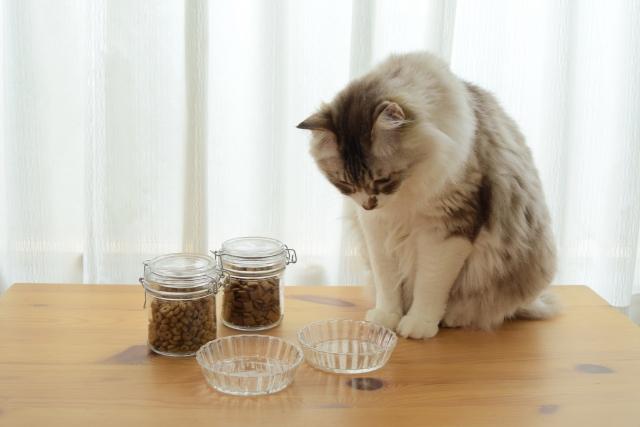 餌を欲しがる猫ちゃん