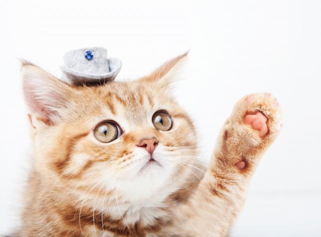 手をあげる猫ちゃん